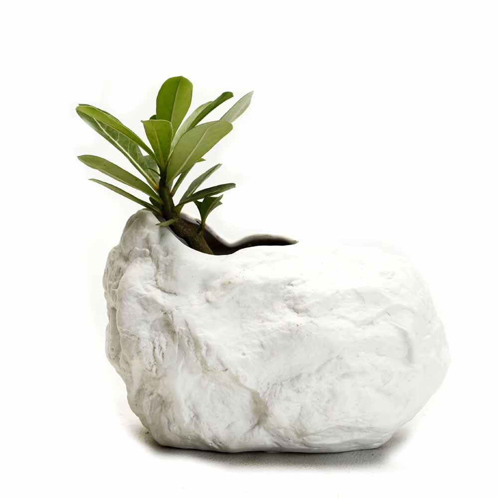 Modern Shell Shaped Ceramic planter pot