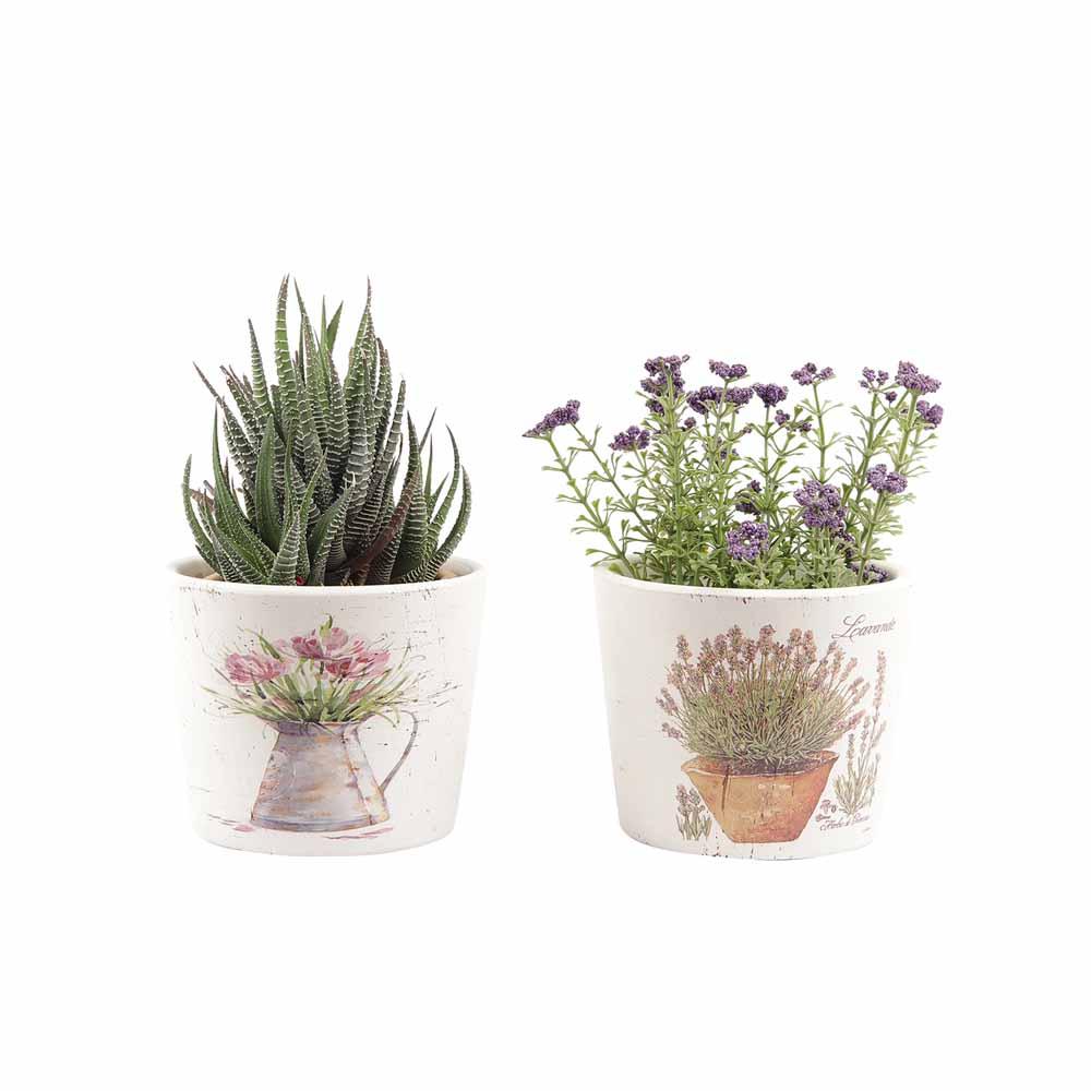 Set of 2 Charming Print 8.5 CM Planter Pots