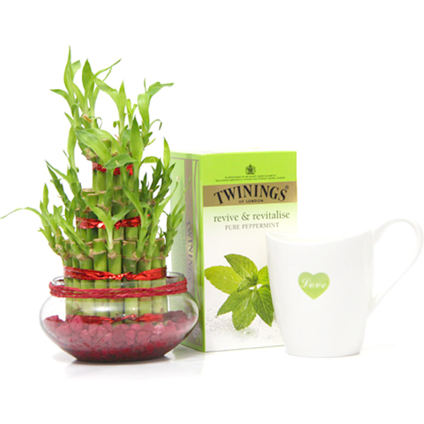 Revitalize Yourself with Tea