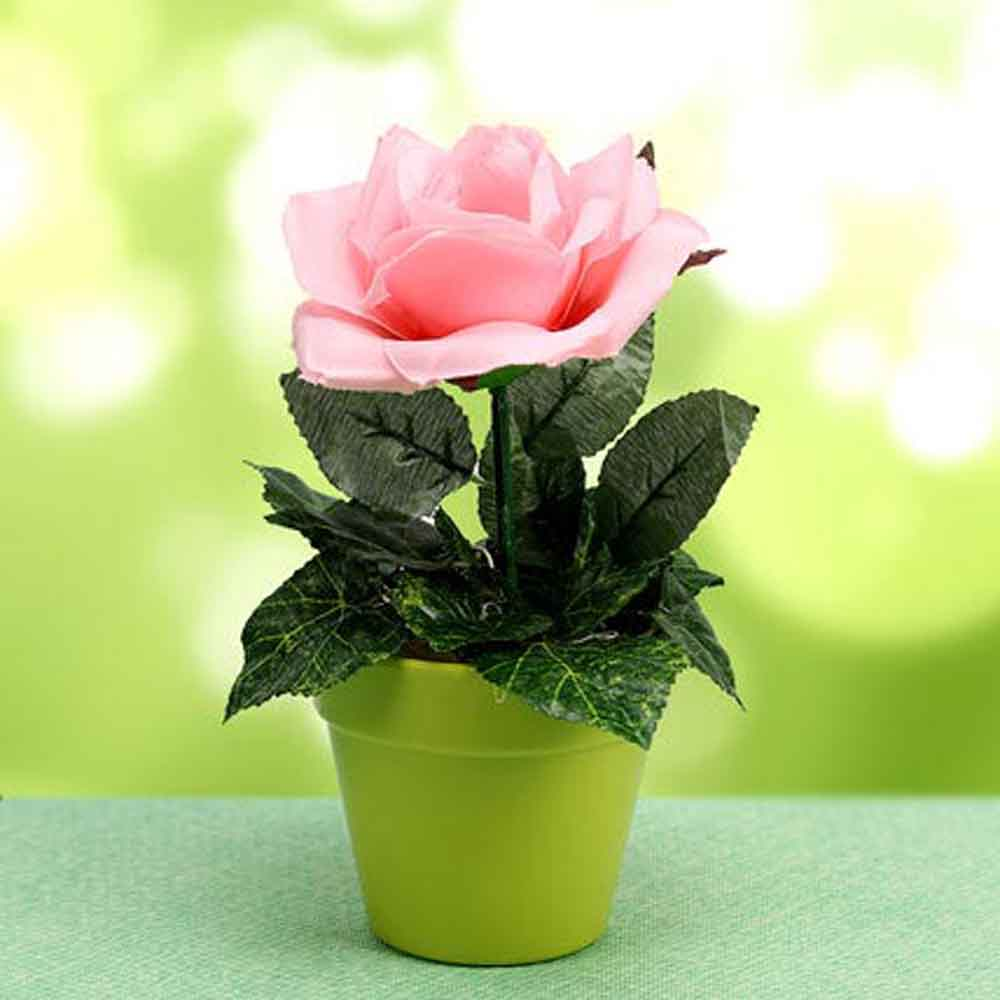 Mothers Day Loving Blooms Plant