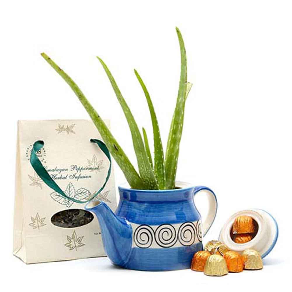 Mothers Day Aloe Vera & Tea