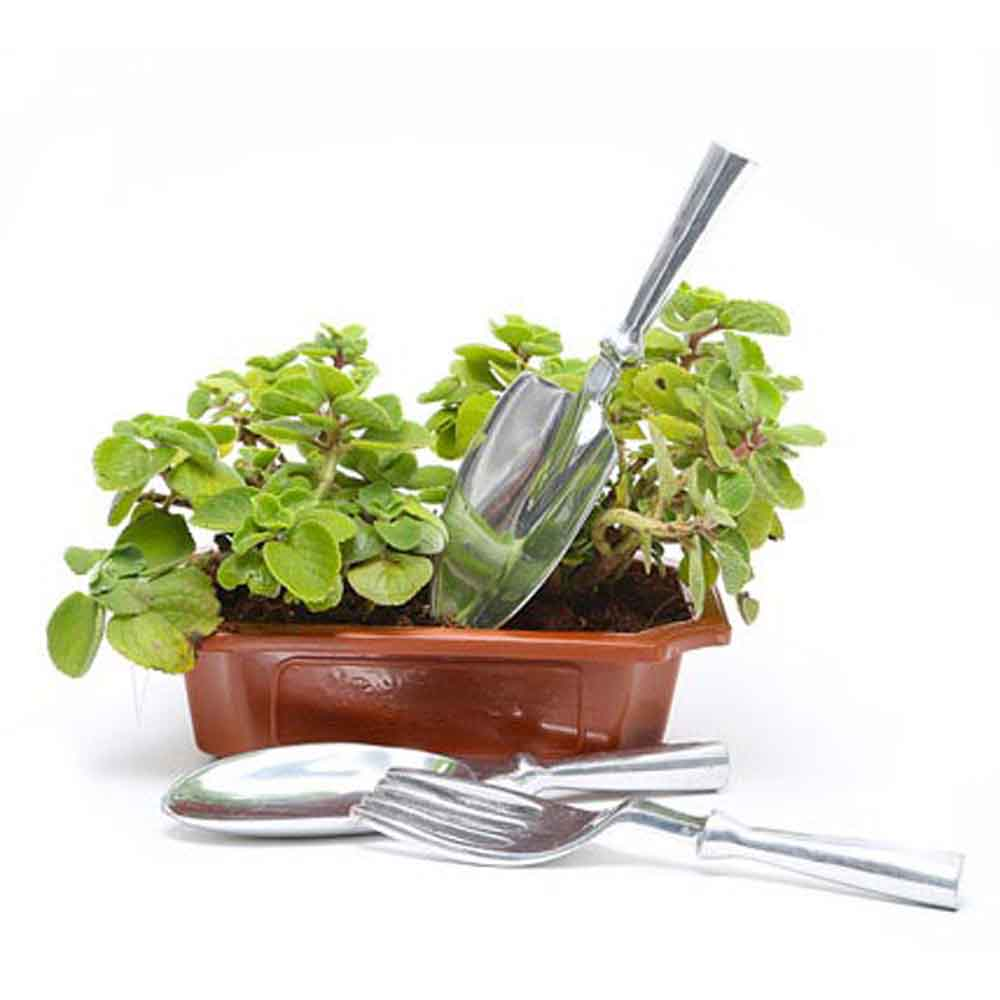 Mothers Day Ajwain Plant with Tools