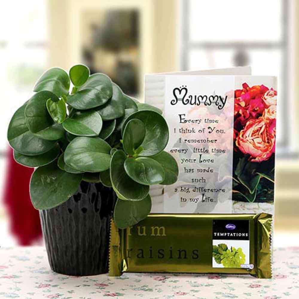 Mothers Day Ferns & Raisins