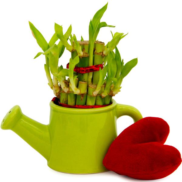 Heart N Lucky Bamboo