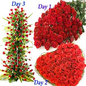 Serenade-Red Hundred Love Roses