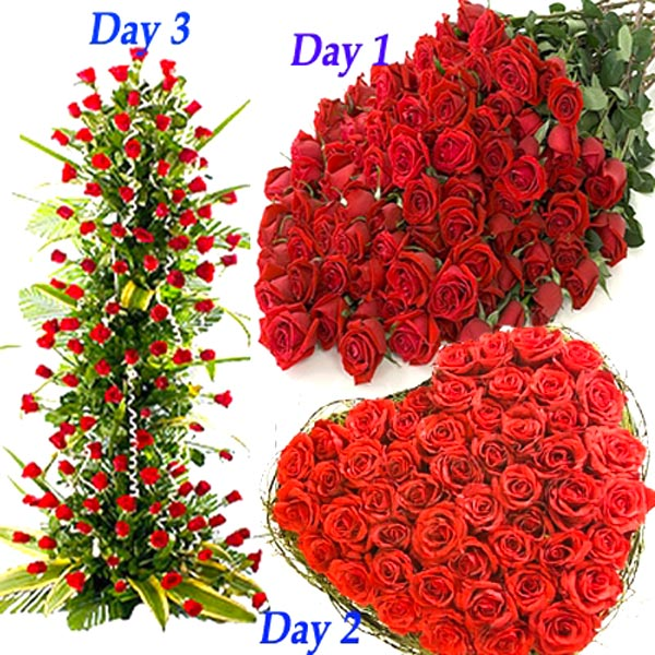 Red Hundred Love Roses