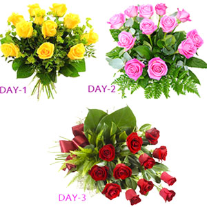 Three Days Roses Serenade