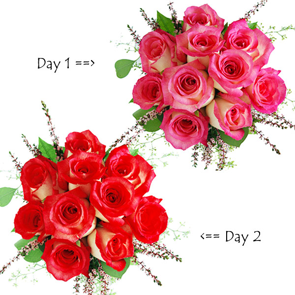Serenade-2 Days Rosy Serenade