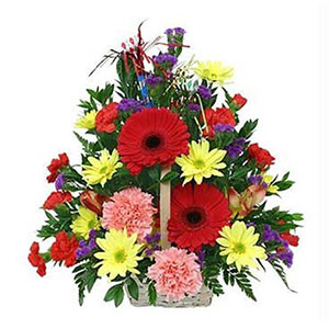 Seasonal Flowers-Emperors Delight