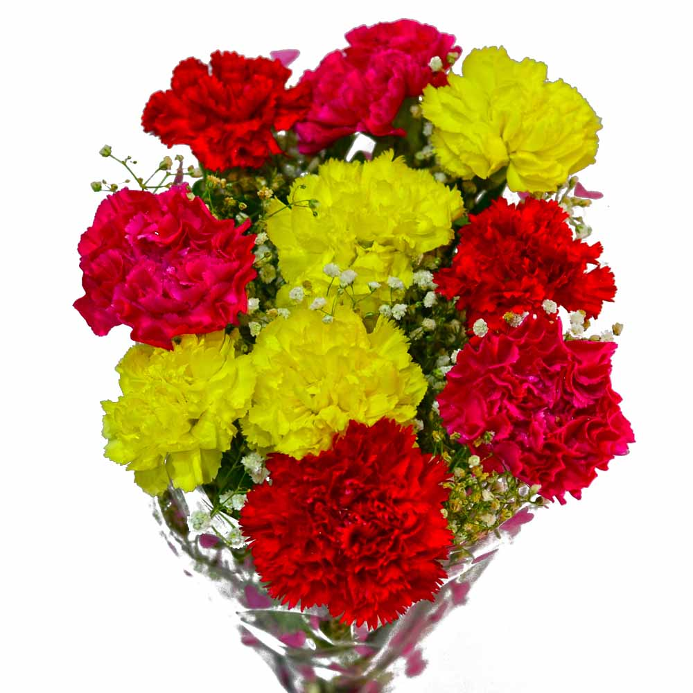 Bouquet of Ten Fresh Carnations