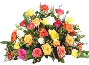 Roses & Fragrance