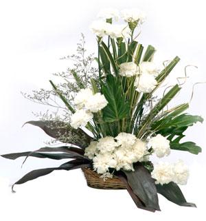 Fresh Flowers-Cool Classic