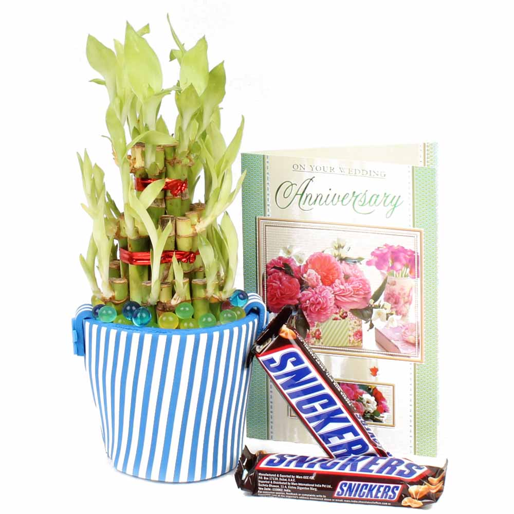 Good Luck Bamboo Plant,Anniversary Card with Snickers Chocolate