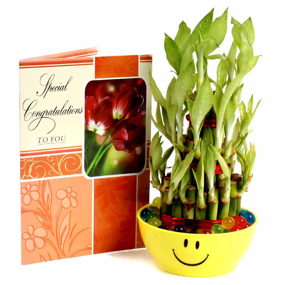Good Luck Bamboo Plant with Congratulations Greeting Card.