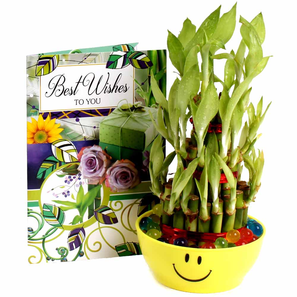 Good Luck Bamboo Plant with Best Wishes Card.