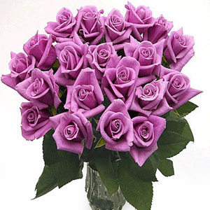 25 Long Stem Lavender Roses