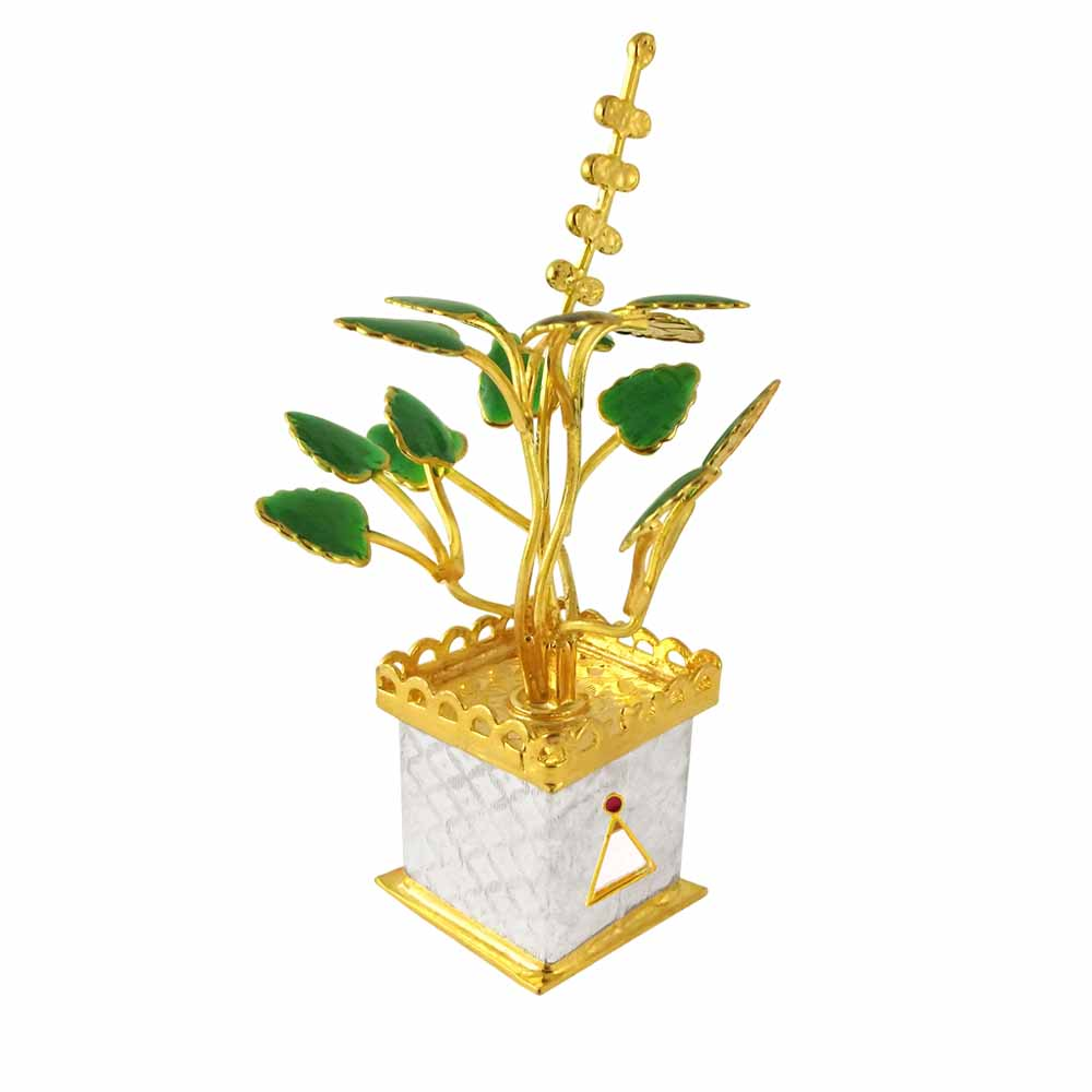 Golden Tulsi Silver Plant