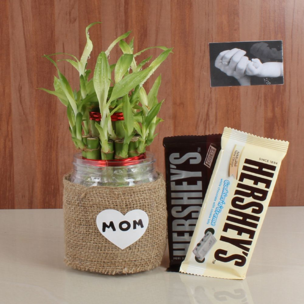 Hershey's Chocolate with Good Luck Bamboo Plant
