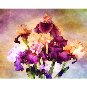 Floral/Still Life-Canvas Art Gallery with Lakering Print