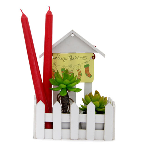 Plants N Candles