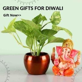 Green Gifts for Diwali